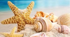 Buone Vacanze Estive!